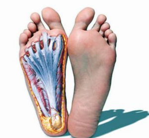 THE FOOT CORE